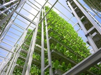 Sky Greens Vertical Farms