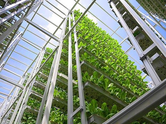 Sky Greens Vertical Farms